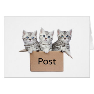 Three young cats in cardboard box on white card