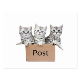 Three young cats in cardboard box on white postcard