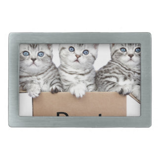 Three young cats in cardboard box on white rectangular belt buckle