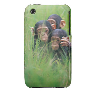 Three young Chimpanzees Pan troglodytes in Case-Mate iPhone 3 Case