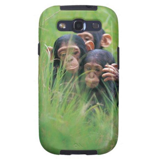 Three young Chimpanzees (Pan troglodytes) in Galaxy SIII Case
