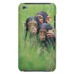 Three young Chimpanzees (Pan troglodytes) in Case-Mate iPod Touch Case