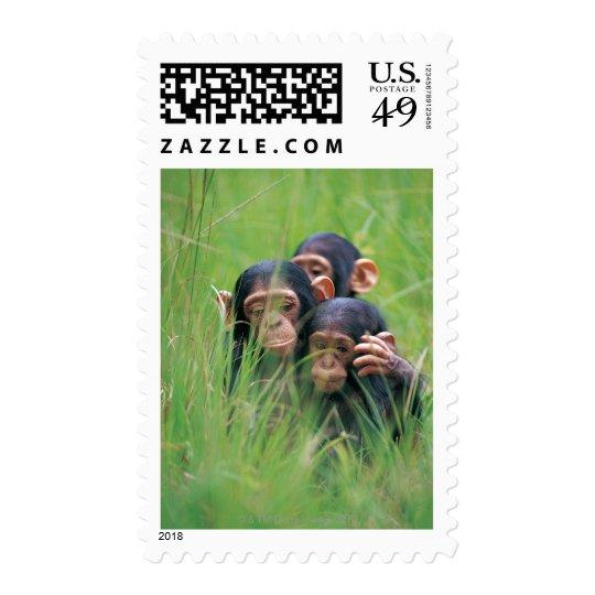 Three young Chimpanzees (Pan troglodytes) in Postage