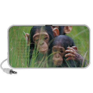 Three young Chimpanzees Pan troglodytes in Notebook Speakers