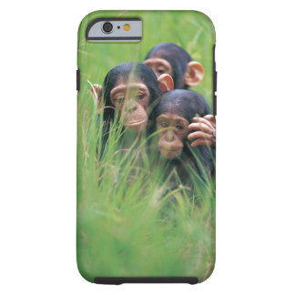 Three young Chimpanzees (Pan troglodytes) in Tough iPhone 6 Case