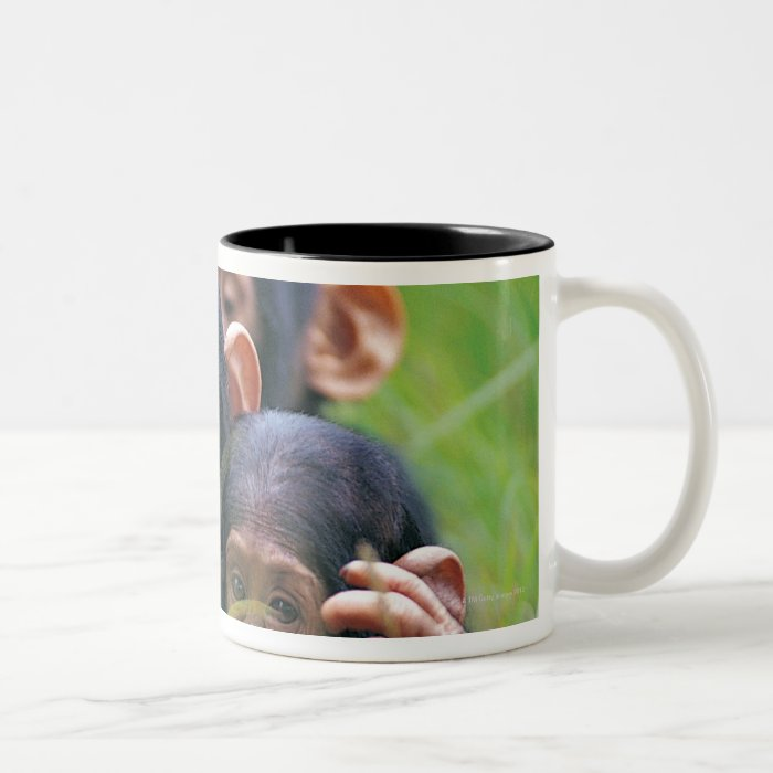 Three young Chimpanzees (Pan troglodytes) in Two-Tone Coffee Mug