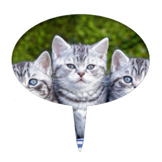 Three young silver tabby cats in checkered basket cake topper