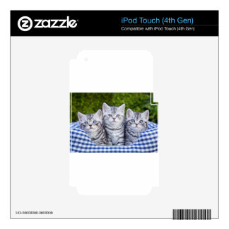 Three young silver tabby cats in checkered basket iPod touch 4G decal
