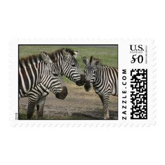 Three Zebras Visiting Postage