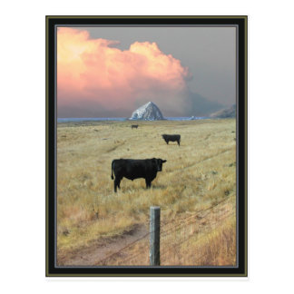 threeblackbulls post cards