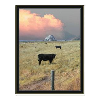threeblackbulls postcard