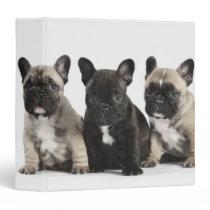 Threee Pedigree Puppies Binder