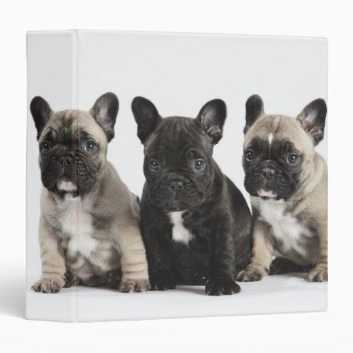 Threee Pedigree Puppies 3 Ring Binders