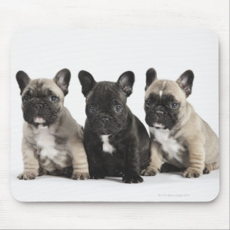 Threee Pedigree Puppies Mouse Pad