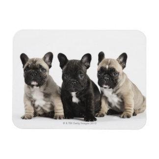 Threee Pedigree Puppies Rectangle Magnet