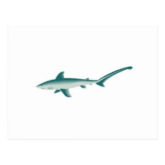 Thresher Shark Post Card