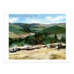 Threshing Wheat, Walla Walla, Washington Vintage Postcards