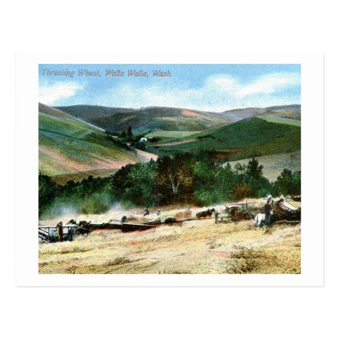 Threshing Wheat, Walla Walla, Washington Vintage Postcard