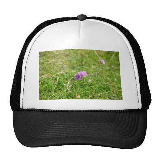Thrift, Sea Pink Mesh Hats