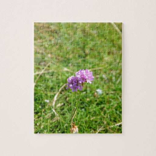 Thrift, Sea Pink Jigsaw Puzzle