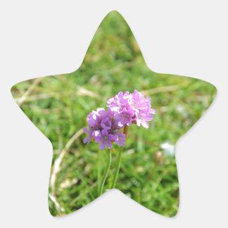 Thrift, Sea Pink Star Sticker