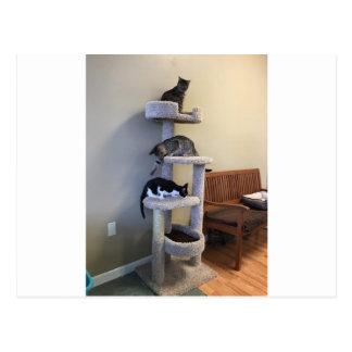 Thrift Shop Cats Postcard