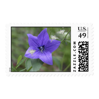 Throne of Fey postage