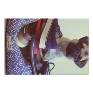 Throne of Shoes Pug Poster Print