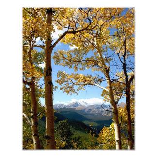 Through the Aspen Photo Print