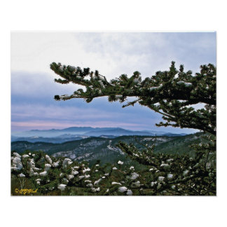 Through the Boughs of a Pine Poster