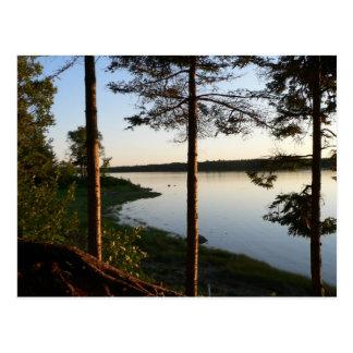 Through the Pines Postcard