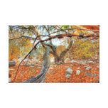 Through the Trees Gallery Wrap Canvas