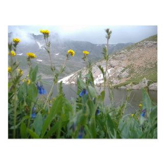 Through The Wild Flowers Postcard