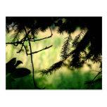 Through Trees Postcard