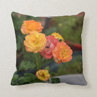Throw pillow with Joseph's Coat rose picture