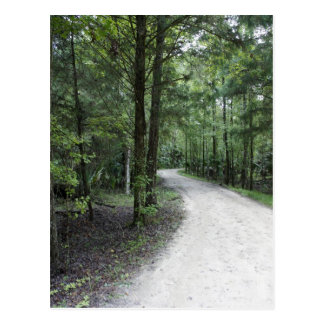 Thru the Florida Woods Postcard