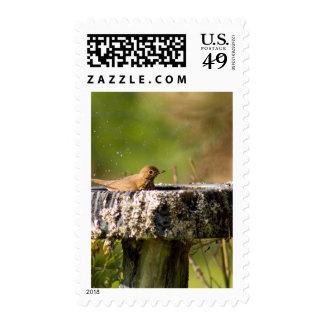 thrush in birdbath stamps