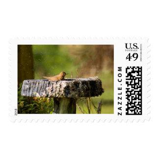 thrush in birdbath postage stamps