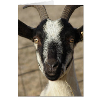 Thumbelia a Yearling Goat Card
