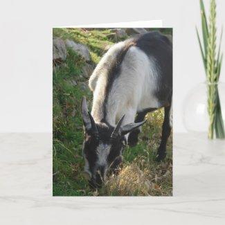 Thumbelina the Beautiful Goat card