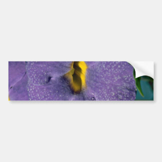 Thumbergia erecta acanthaceae flowers bumper stickers
