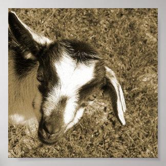 Thumblina la cabra póster