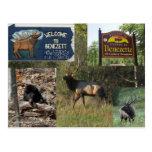 Thundering Elk BENEZETTE PA Postcard