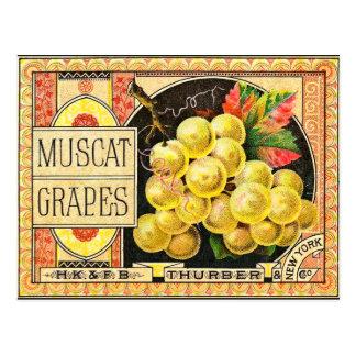 Thurber Muscat Grapes - Vintage Crate Label Postcard