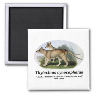 Thylacinus cynocephalus (Tasmanian tiger or wolf) 2 Inch Square Magnet