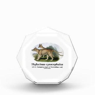 Thylacinus cynocephalus (Tasmanian tiger or wolf) Award