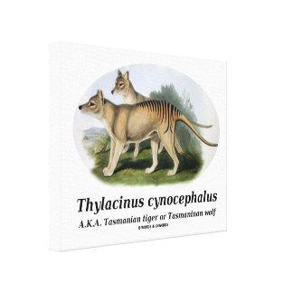 Thylacinus cynocephalus (Tasmanian tiger or wolf) Canvas Print