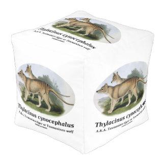 Thylacinus cynocephalus (Tasmanian tiger or wolf) Cube Pouf