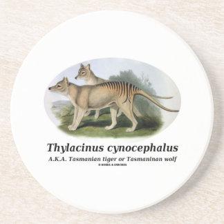 Thylacinus cynocephalus (Tasmanian tiger or wolf) Drink Coaster
