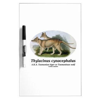 Thylacinus cynocephalus (Tasmanian tiger or wolf) Dry Erase Board